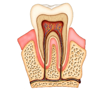 dental root canal treatment available form San Carlos Dentist