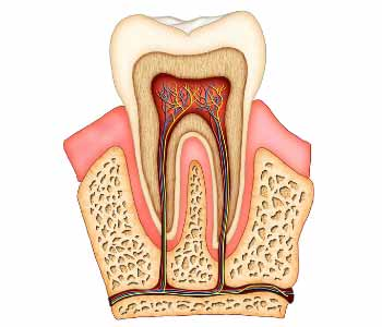 take the fear out of dental root canal treatment